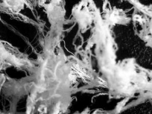 angelhairboldman - Los microorganismos que calleron en Evora tras el paso de un OVNI