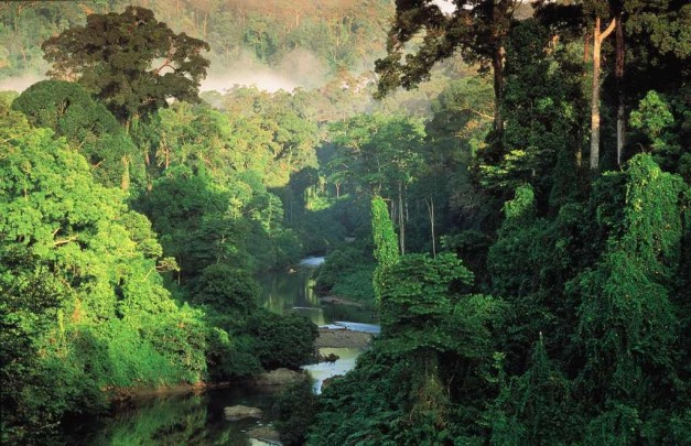 bosque-tropical-de-belizen-tropical-broadleaf-evergreen-forest-the-rainforestroebuckclasses-com-rainforest